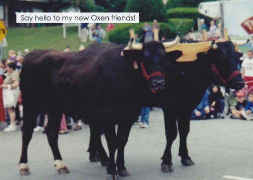 Great Big Oxen