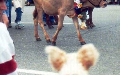 Annie Watches the Cows