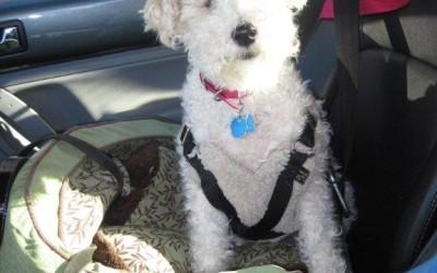 Annie in the car